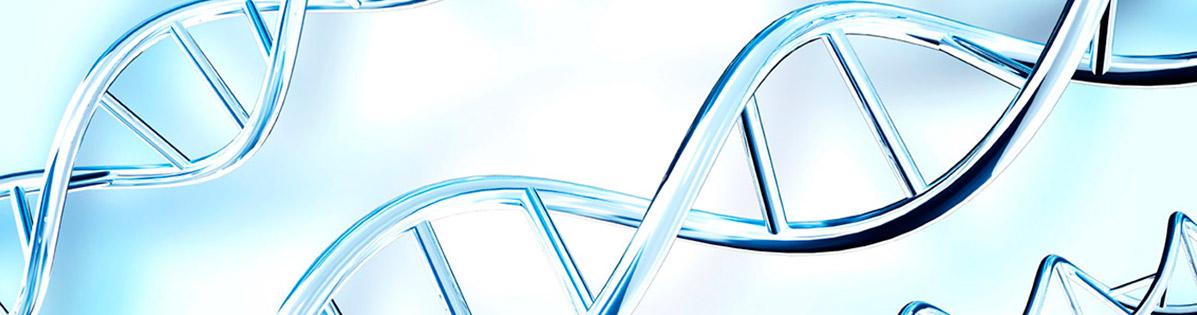 Fragmentación ADN espermático